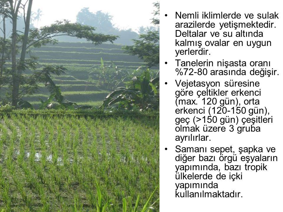 Nemli iklimlerde ve sulak arazilerde yetişmektedir