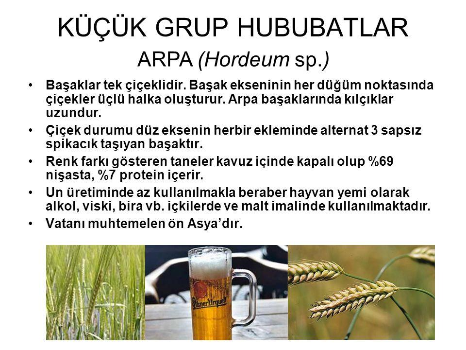 KÜÇÜK GRUP HUBUBATLAR ARPA (Hordeum sp.)