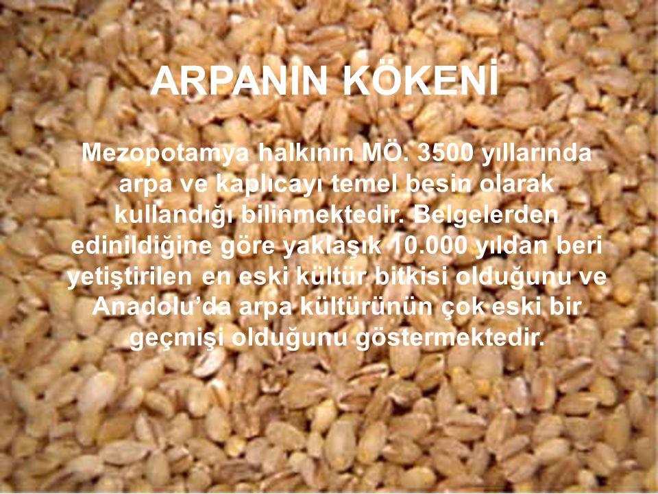 ARPANIN KÖKENİ