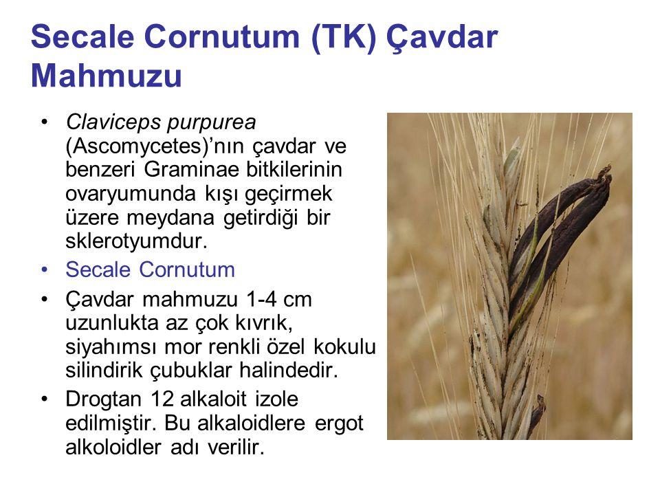 Secale Cornutum (TK) Çavdar Mahmuzu