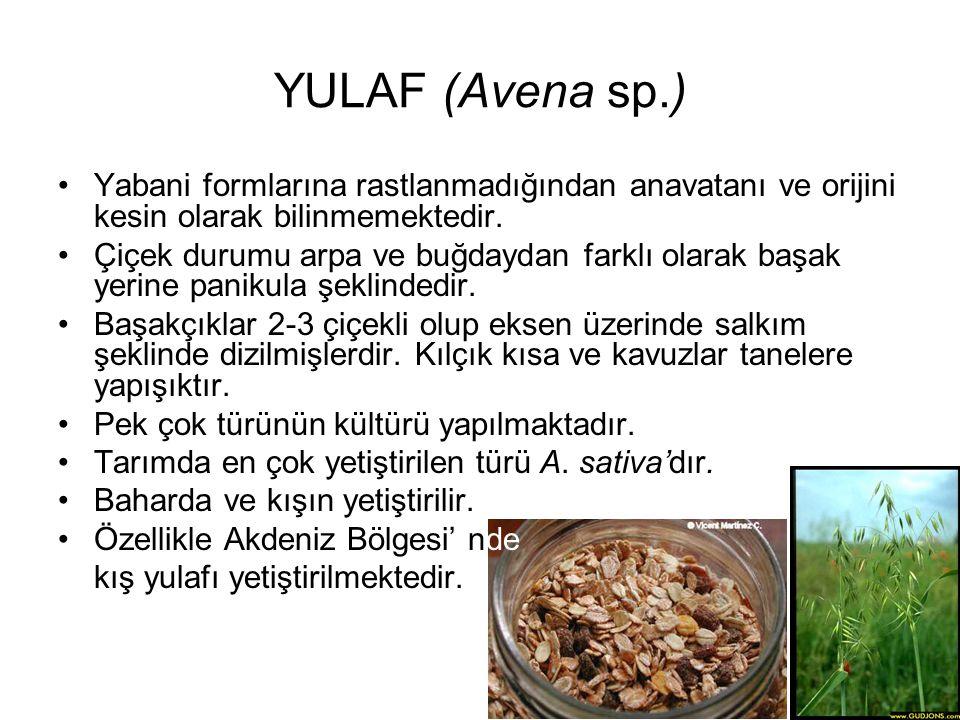 YULAF (Avena sp.) Yabani formlarına rastlanmadığından anavatanı ve orijini kesin olarak bilinmemektedir.