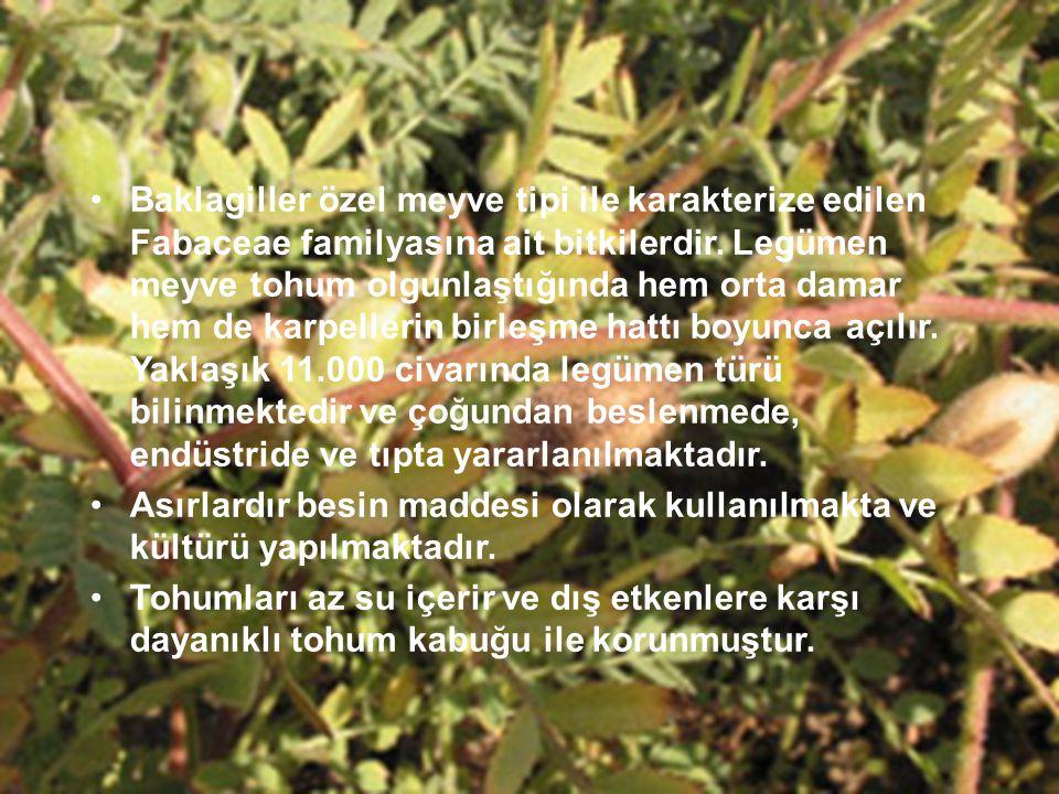 Baklagiller özel meyve tipi ile karakterize edilen Fabaceae familyasına ait bitkilerdir. Legümen meyve tohum olgunlaştığında hem orta damar hem de karpellerin birleşme hattı boyunca açılır. Yaklaşık 11.000 civarında legümen türü bilinmektedir ve çoğundan beslenmede, endüstride ve tıpta yararlanılmaktadır.