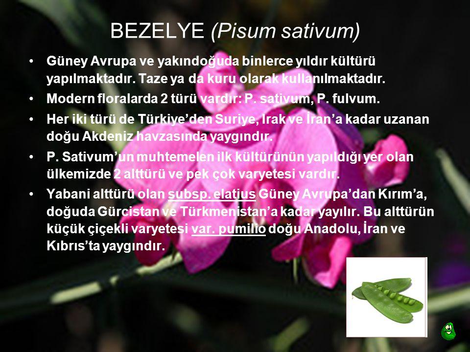 BEZELYE (Pisum sativum)