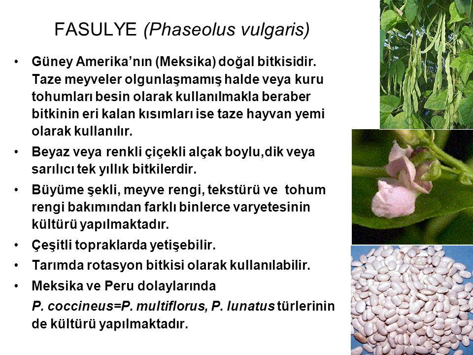 FASULYE (Phaseolus vulgaris)