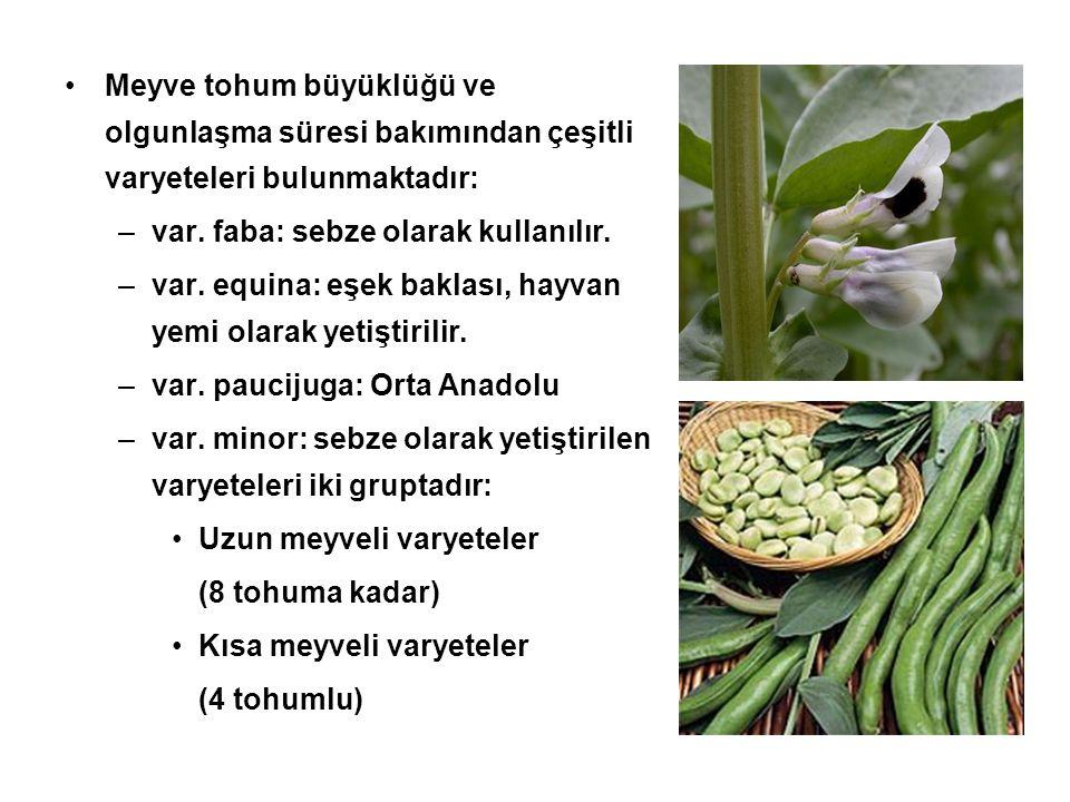 Meyve tohum büyüklüğü ve olgunlaşma süresi bakımından çeşitli varyeteleri bulunmaktadır: