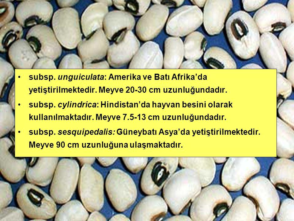 subsp. unguiculata: Amerika ve Batı Afrika'da yetiştirilmektedir