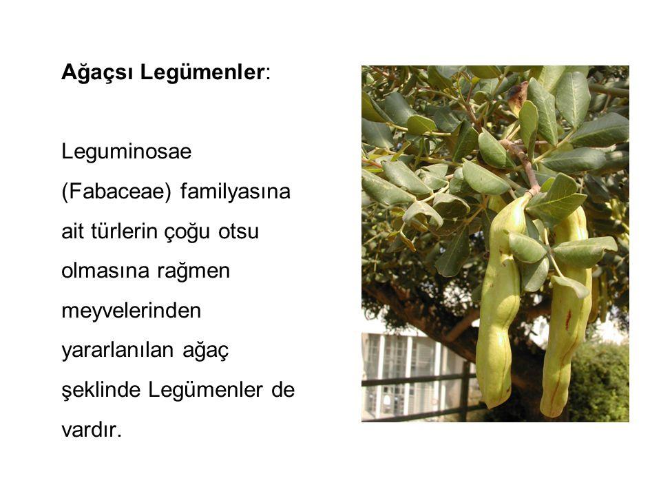Ağaçsı Legümenler: Leguminosae (Fabaceae) familyasına ait türlerin çoğu otsu olmasına rağmen meyvelerinden yararlanılan ağaç şeklinde Legümenler de vardır.