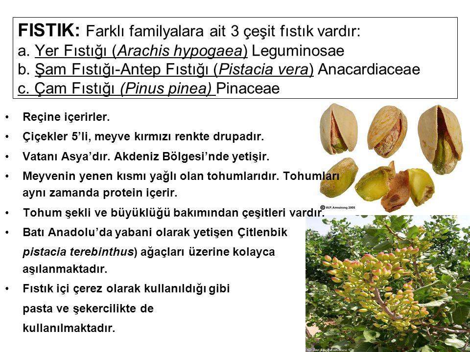 FISTIK: Farklı familyalara ait 3 çeşit fıstık vardır: a