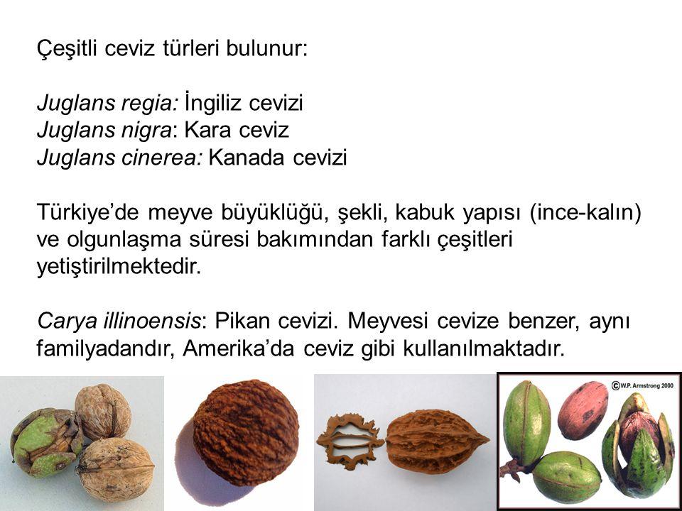 Çeşitli ceviz türleri bulunur: