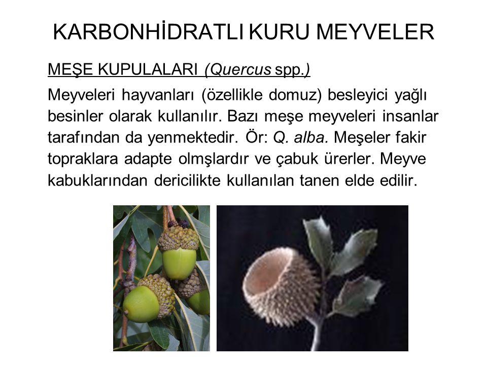 KARBONHİDRATLI KURU MEYVELER