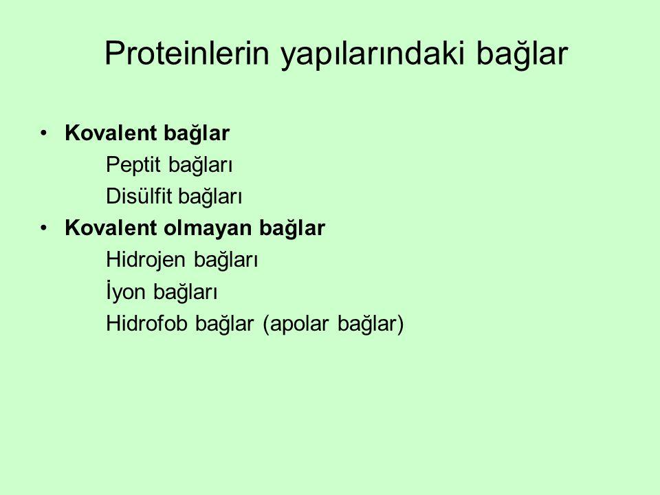 Proteinlerin yapılarındaki bağlar
