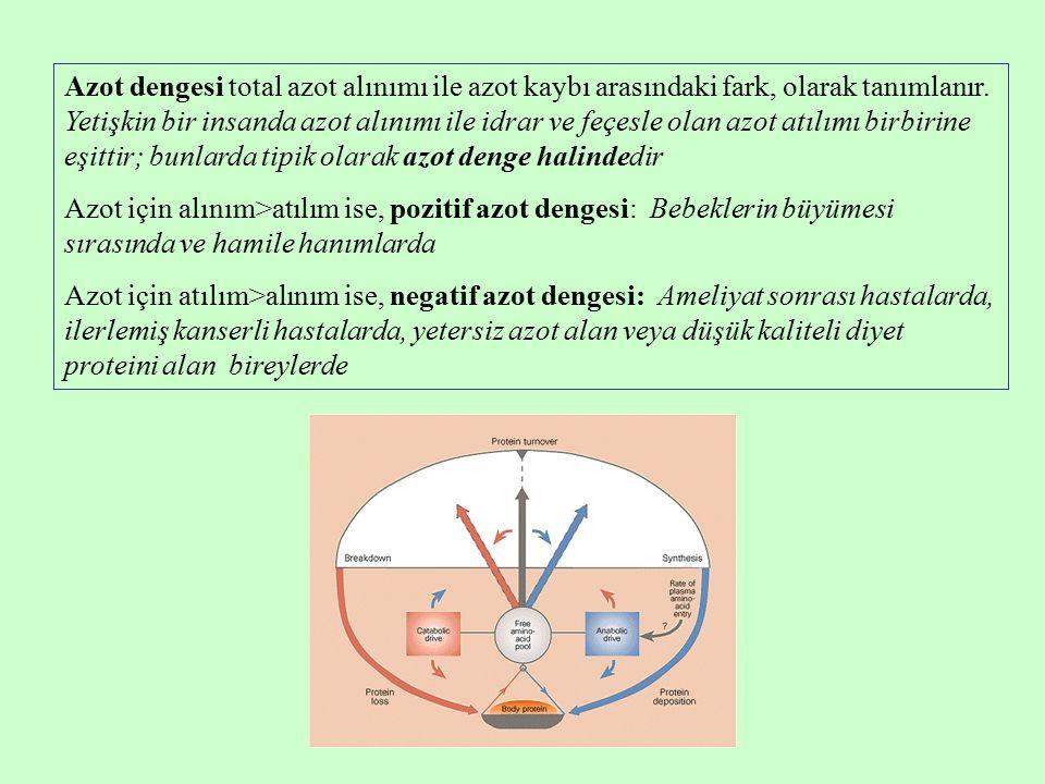 Azot dengesi total azot alınımı ile azot kaybı arasındaki fark, olarak tanımlanır. Yetişkin bir insanda azot alınımı ile idrar ve feçesle olan azot atılımı birbirine eşittir; bunlarda tipik olarak azot denge halindedir