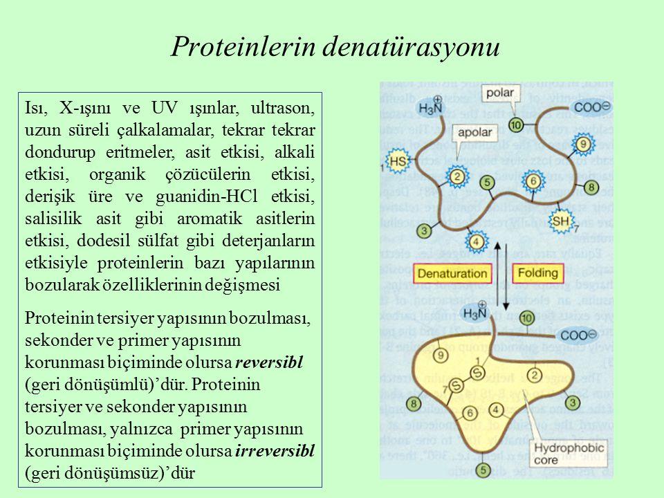 Proteinlerin denatürasyonu