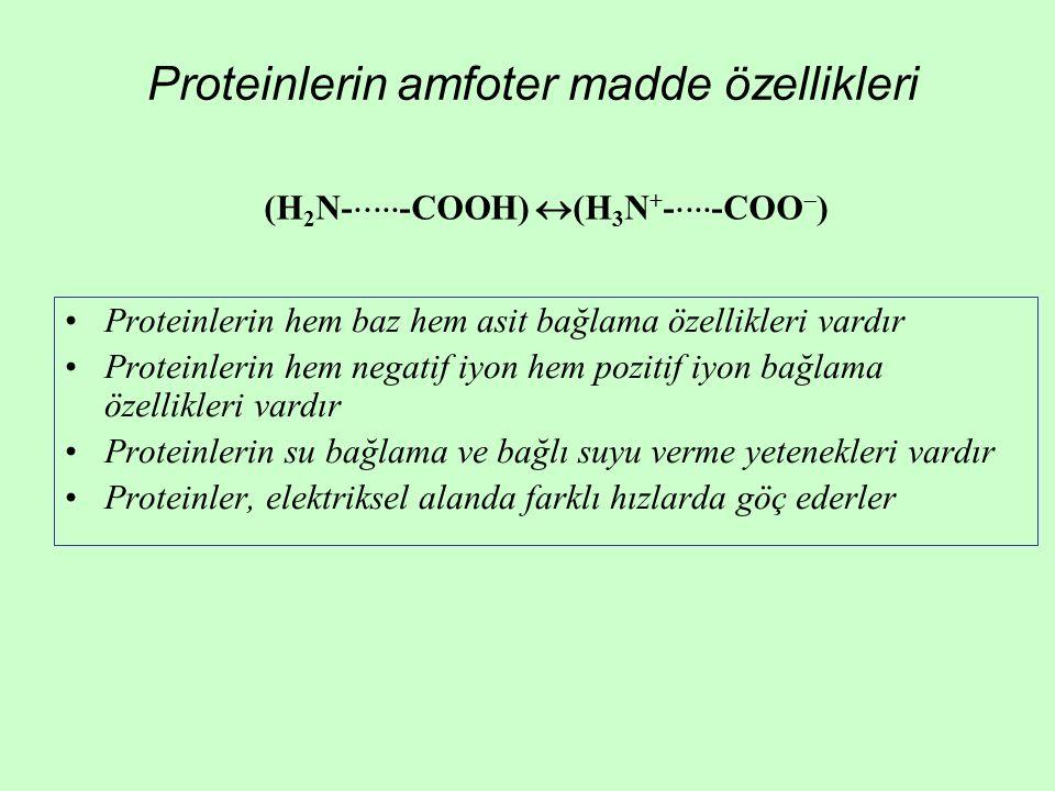 Proteinlerin amfoter madde özellikleri