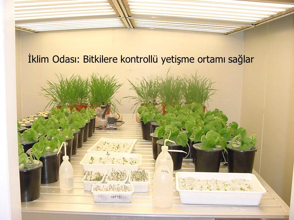 İklim Odası: Bitkilere kontrollü yetişme ortamı sağlar