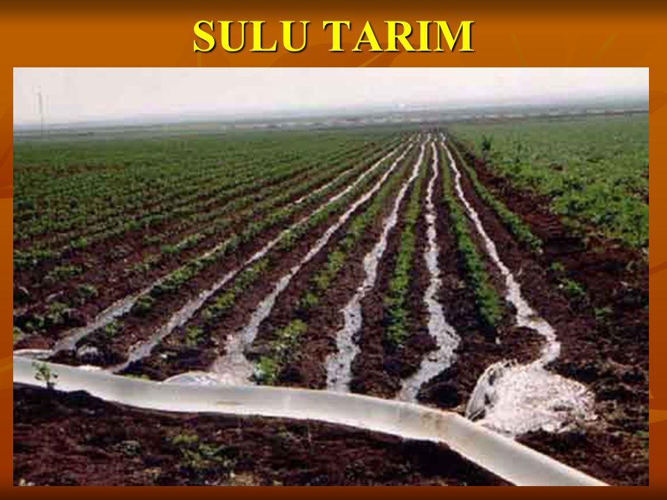 SULU TARIM