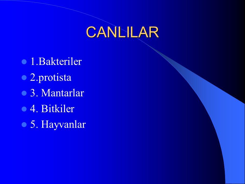 CANLILAR 1.Bakteriler 2.protista 3. Mantarlar 4. Bitkiler 5. Hayvanlar