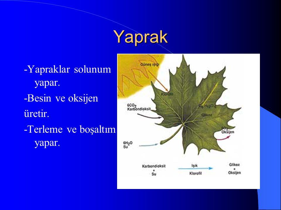 Yaprak -Yapraklar solunum yapar. -Besin ve oksijen üretir.