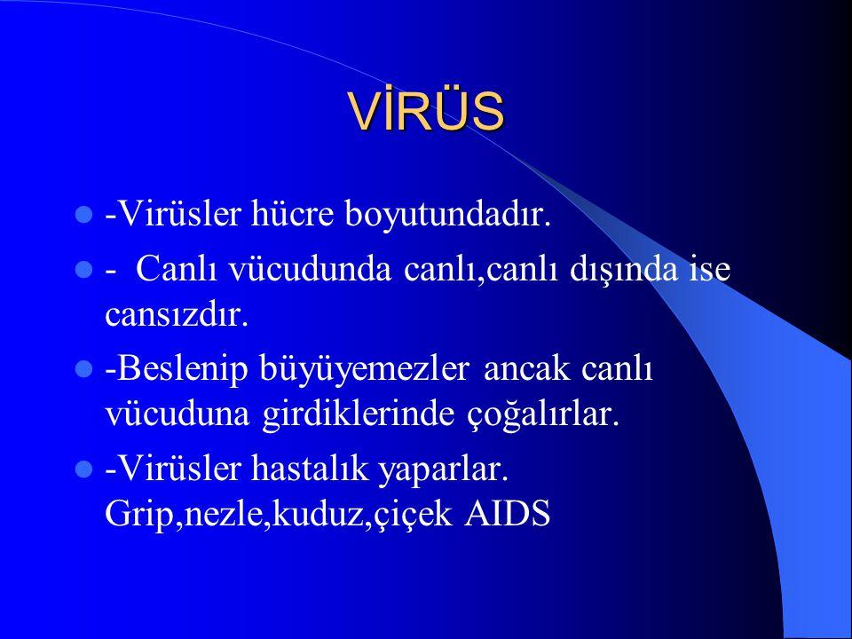 VİRÜS -Virüsler hücre boyutundadır.
