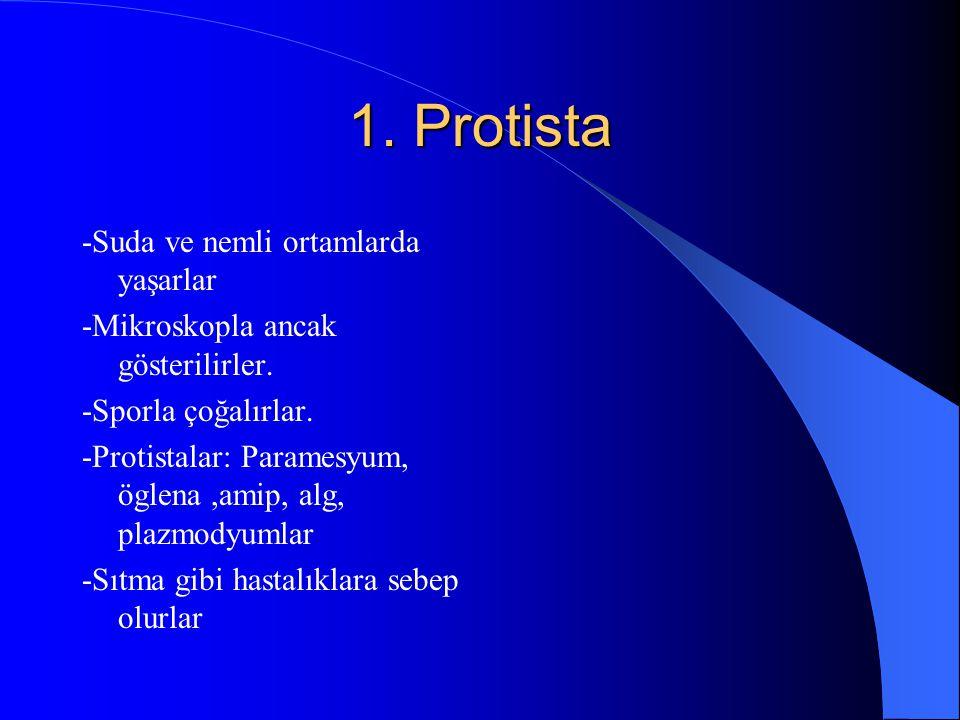 1. Protista -Suda ve nemli ortamlarda yaşarlar