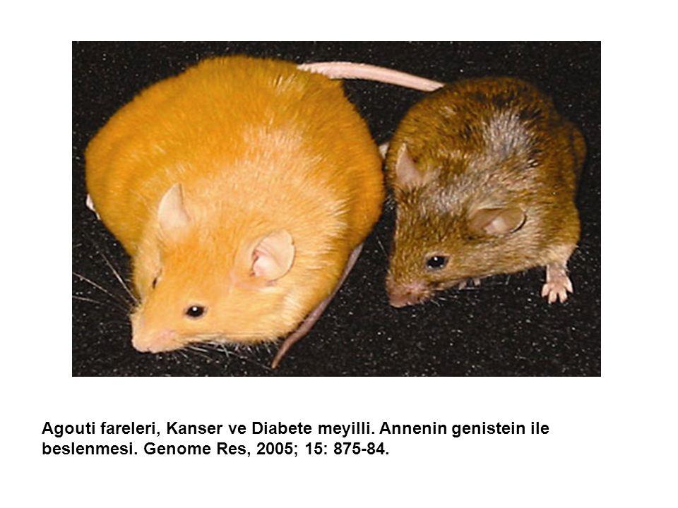 Agouti fareleri, Kanser ve Diabete meyilli