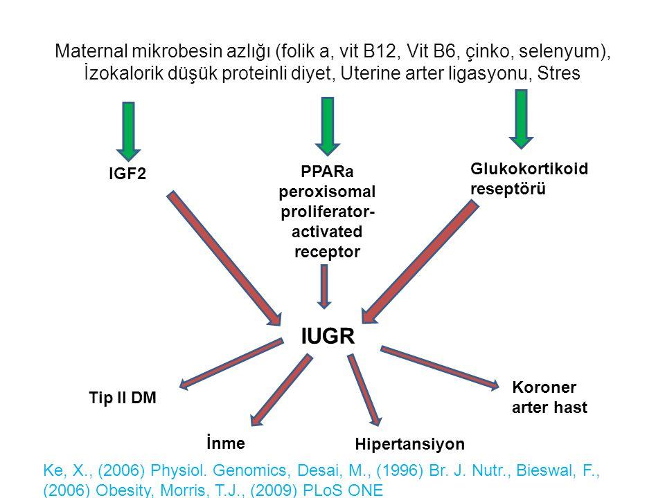 peroxisomal proliferator-activated receptor