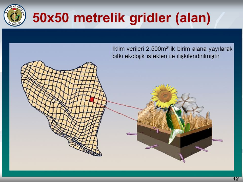 50x50 metrelik gridler (alan)