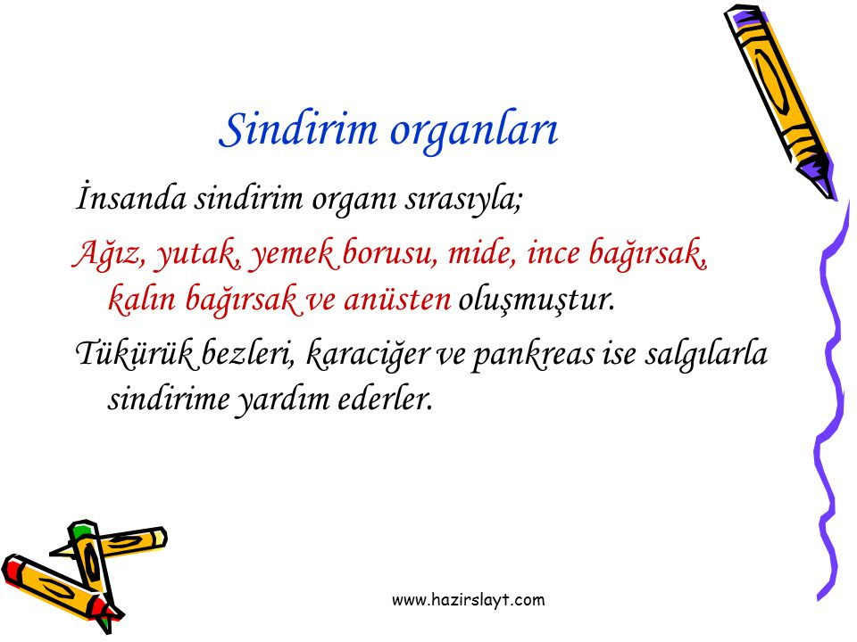 Sindirim organları İnsanda sindirim organı sırasıyla;