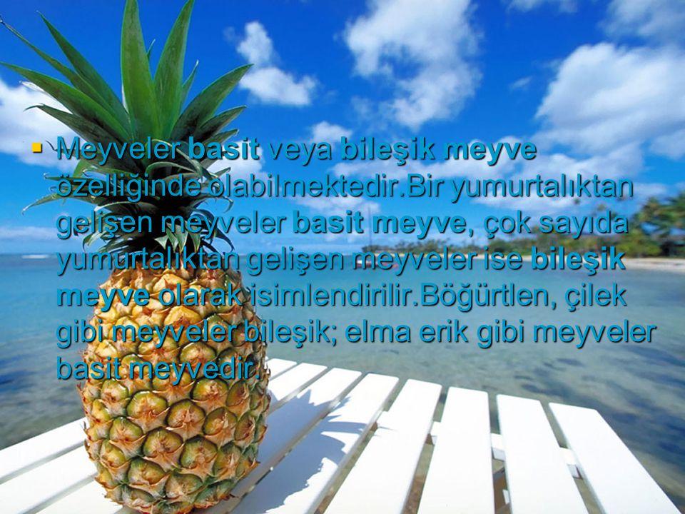 Meyveler basit veya bileşik meyve özelliğinde olabilmektedir
