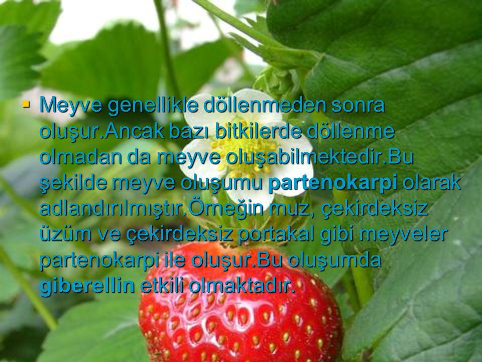 Meyve genellikle döllenmeden sonra oluşur