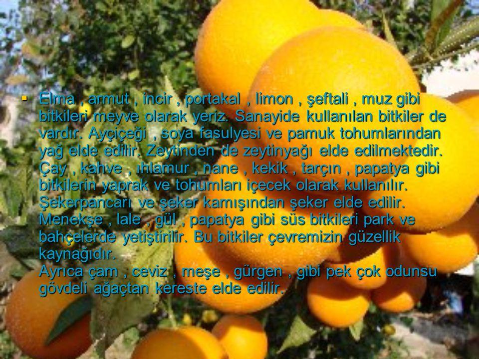 Elma , armut , incir , portakal , limon , şeftali , muz gibi bitkileri meyve olarak yeriz.