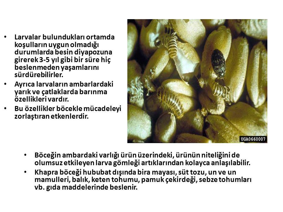 Larvalar bulundukları ortamda koşulların uygun olmadığı durumlarda besin diyapozuna girerek 3-5 yıl gibi bir süre hiç beslenmeden yaşamlarını sürdürebilirler.