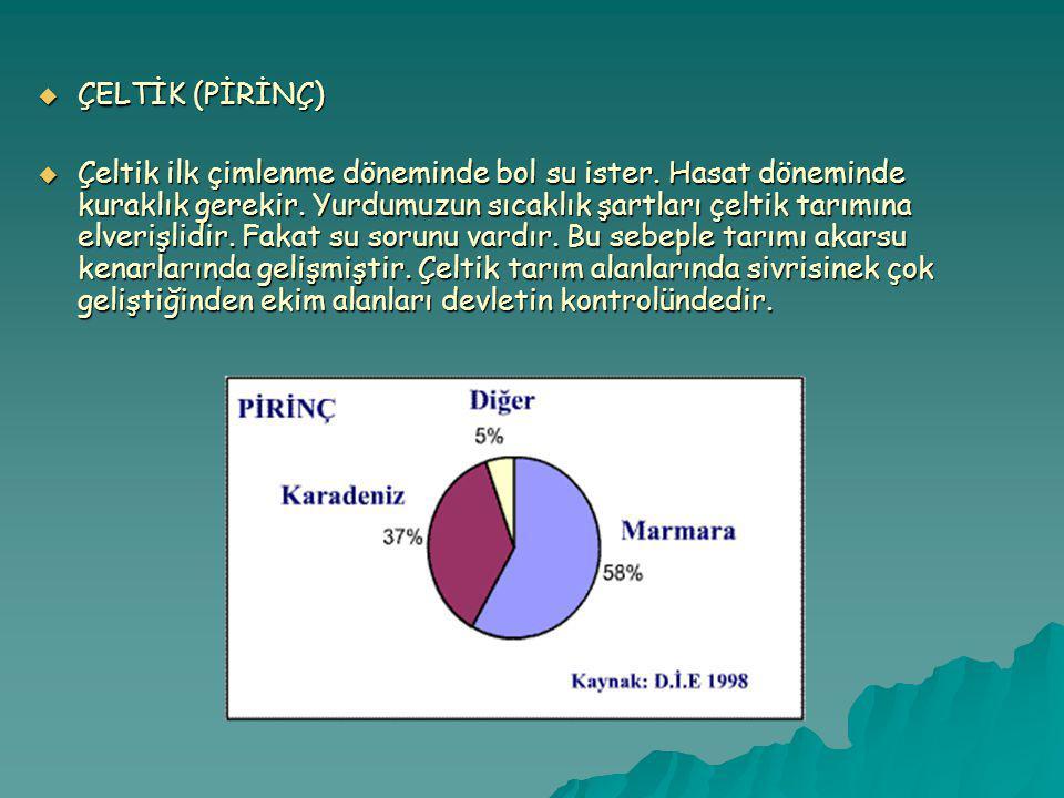 ÇELTİK (PİRİNÇ)