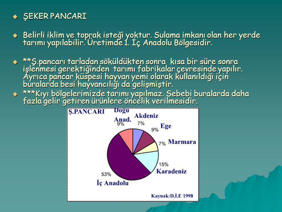 ŞEKER PANCARI Belirli iklim ve toprak isteği yoktur. Sulama imkanı olan her yerde tarımı yapılabilir. Üretimde 1. İç Anadolu Bölgesidir.
