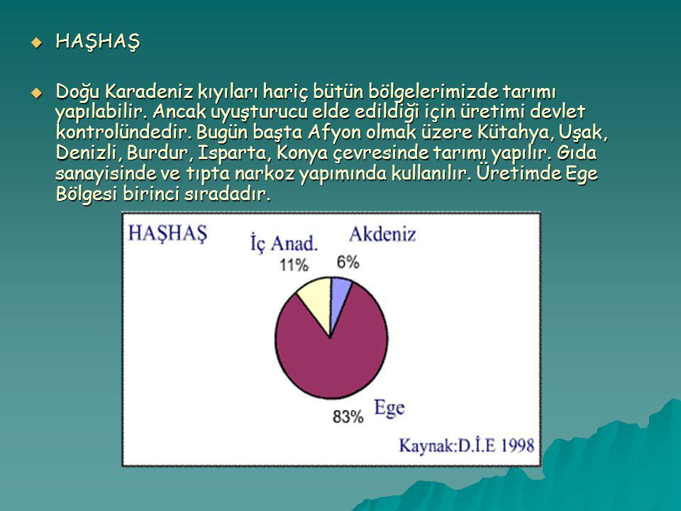 HAŞHAŞ