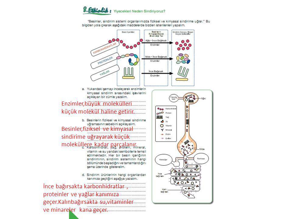 Enzimler,büyük molekülleri küçük molekül haline getirir.