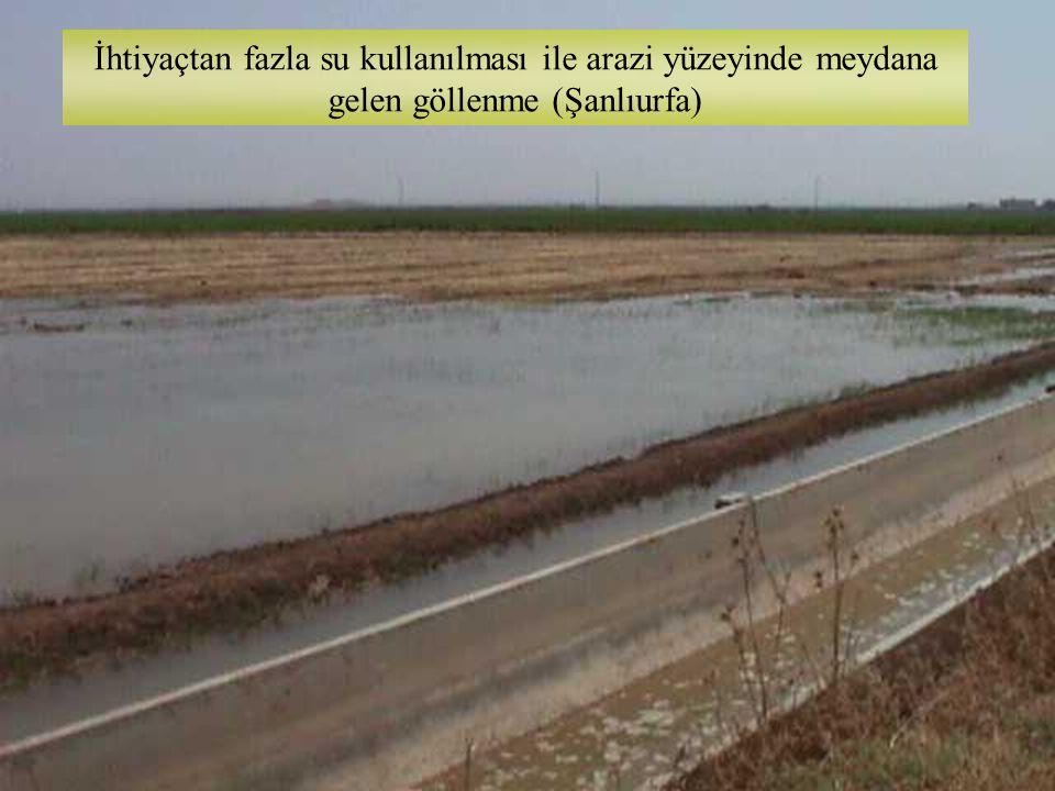 İhtiyaçtan fazla su kullanılması ile arazi yüzeyinde meydana gelen göllenme (Şanlıurfa)