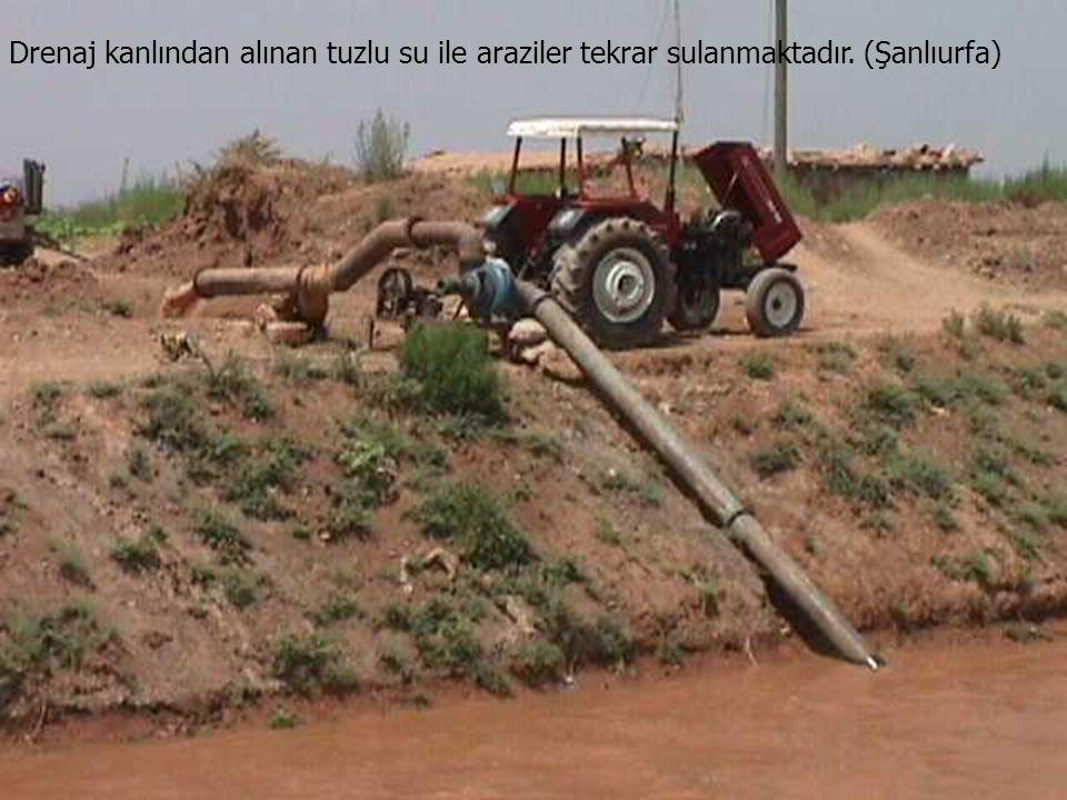 Drenaj kanlından alınan tuzlu su ile araziler tekrar sulanmaktadır