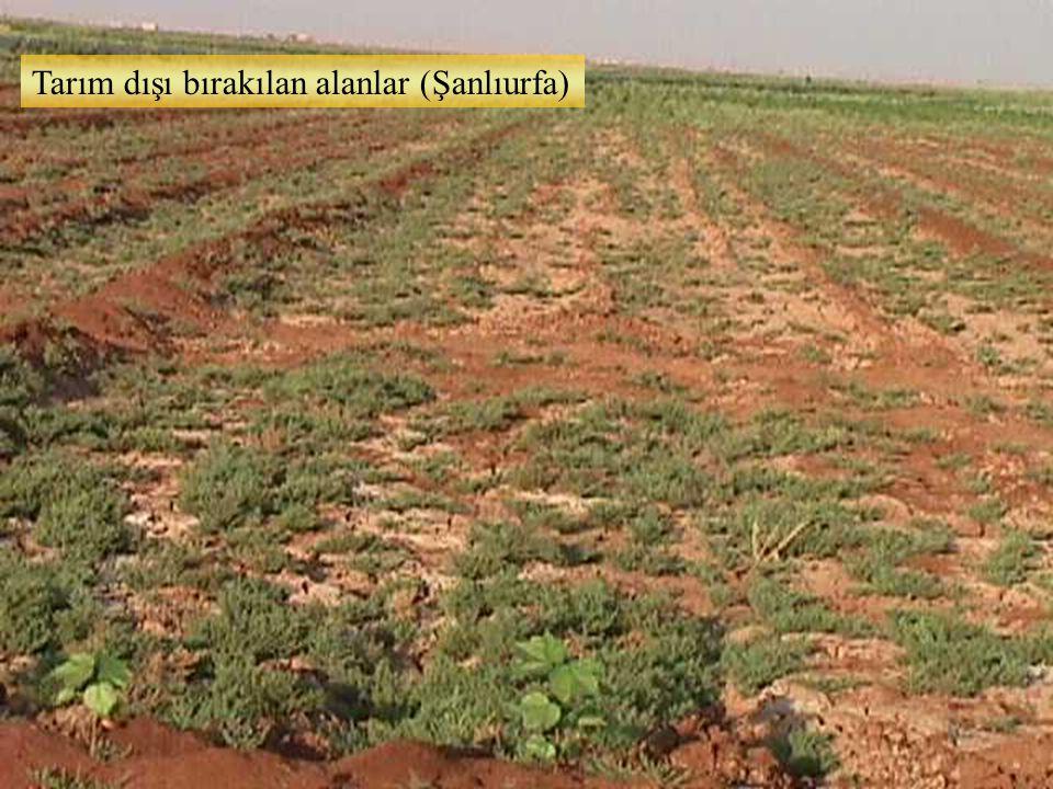 Tarım dışı bırakılan alanlar (Şanlıurfa)