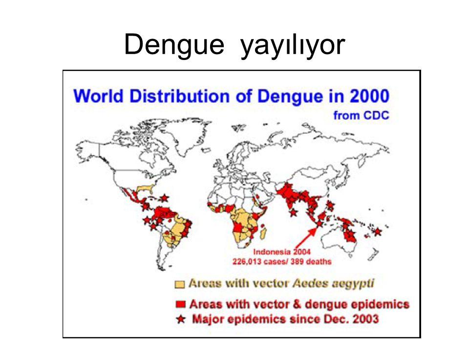 Dengue yayılıyor