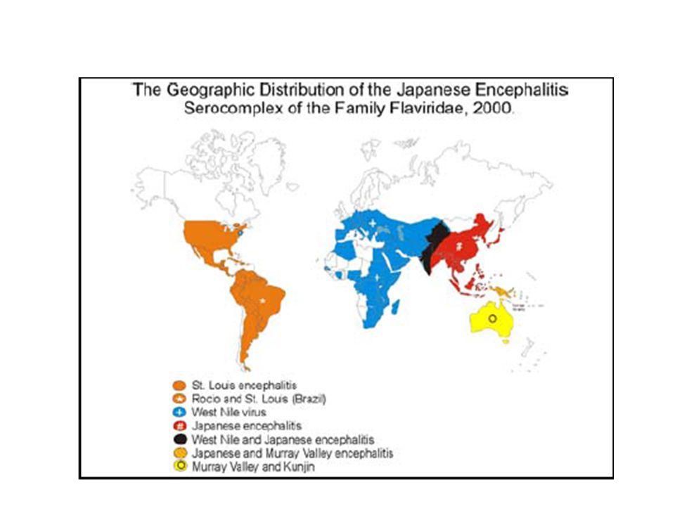 Japon ansefaliti