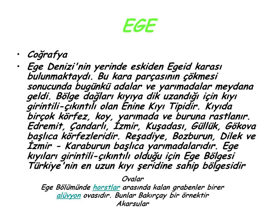EGE Coğrafya.