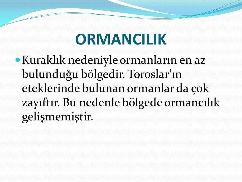 ORMANCILIK