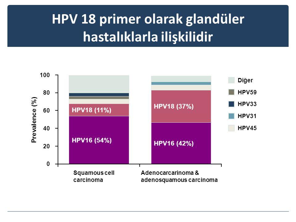 HPV 18 primer olarak glandüler hastalıklarla ilişkilidir