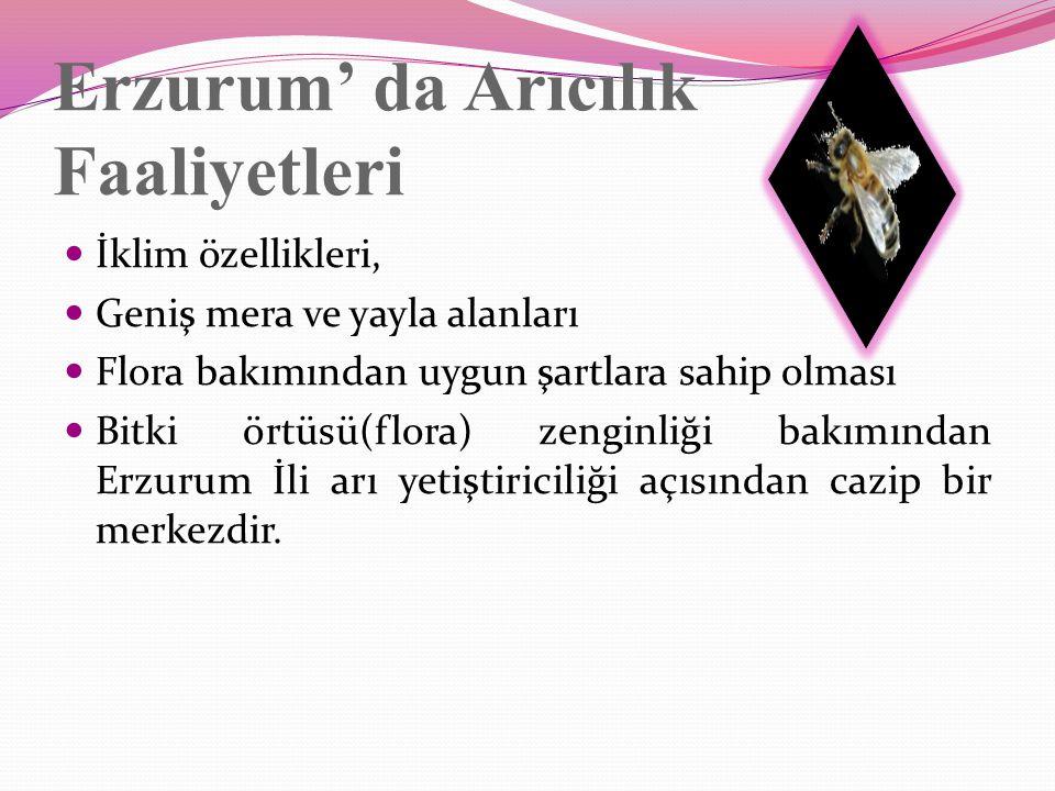 Erzurum' da Arıcılık Faaliyetleri