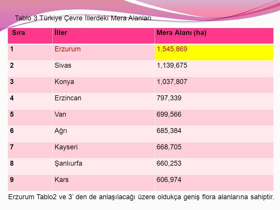 Tablo 3 Türkiye Çevre İllerdeki Mera Alanları