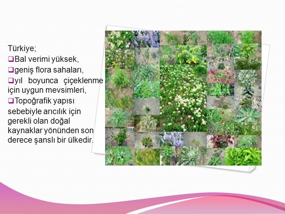 Türkiye; Bal verimi yüksek, geniş flora sahaları, yıl boyunca çiçeklenme için uygun mevsimleri, Topoğrafik yapısı.