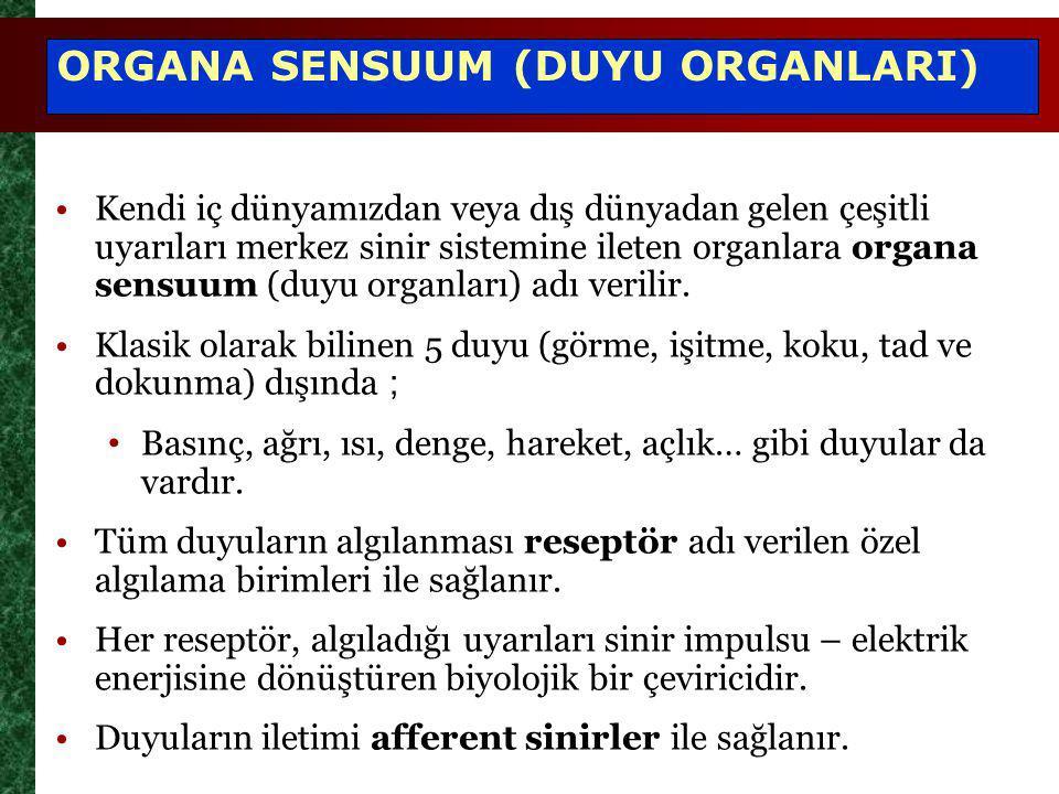 ORGANA SENSUUM (DUYU ORGANLARI)