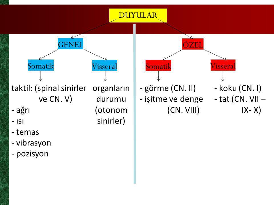organların durumu (otonom sinirler)