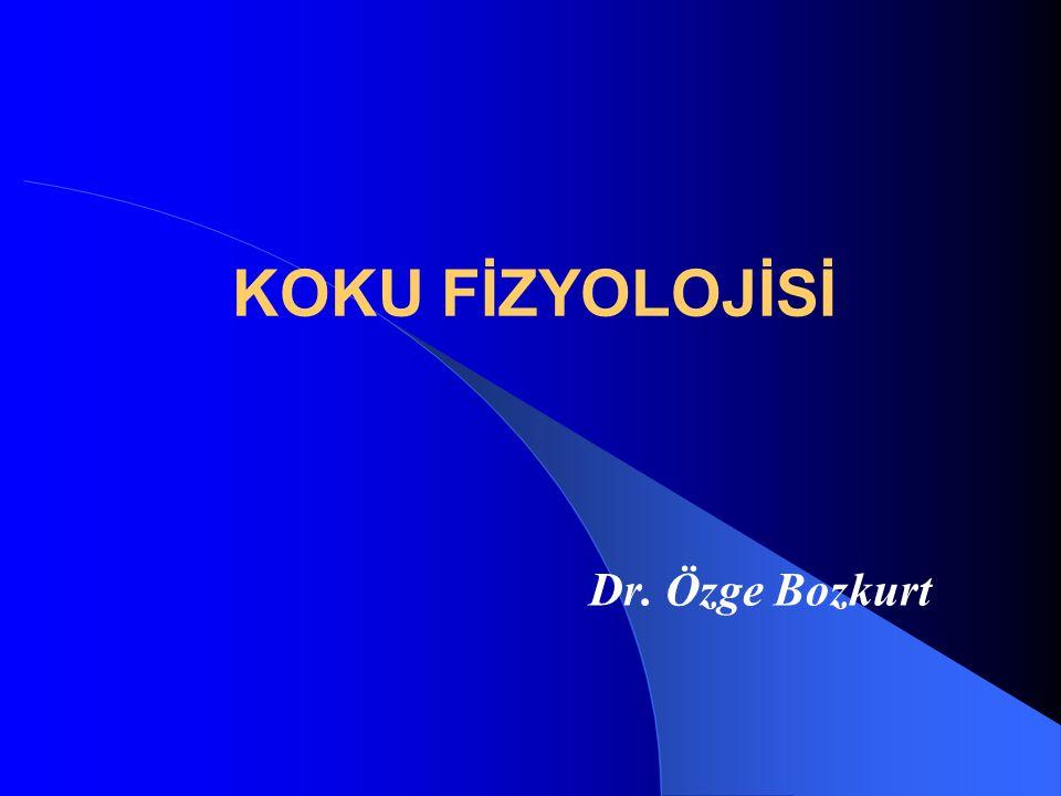 KOKU FİZYOLOJİSİ Dr. Özge Bozkurt